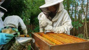 Atelier Une ruche dans mon jardin avec Olivier